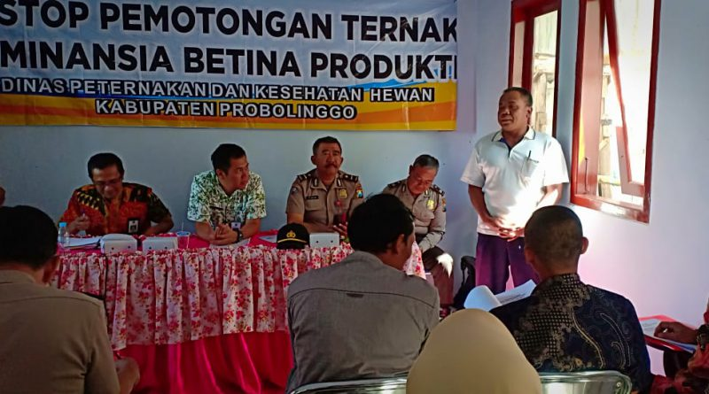 Pemkab Probolinggo Minta Masyarakat Tidak Potong Ternak Betina Produktif