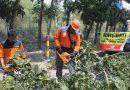 Rawan Tumbang, BPBD Probolinggo Pangkas Pohon Jalan Nasional